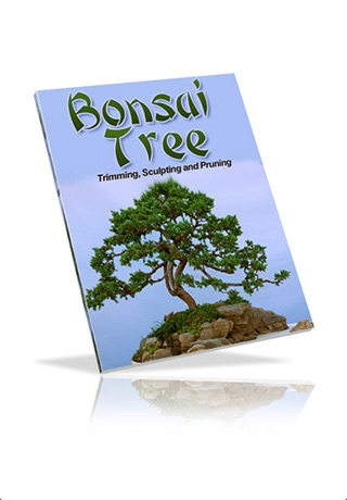 Bonsai Tree - The Art of Growing Bonsai Trees