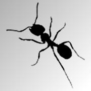 Ant Feeder