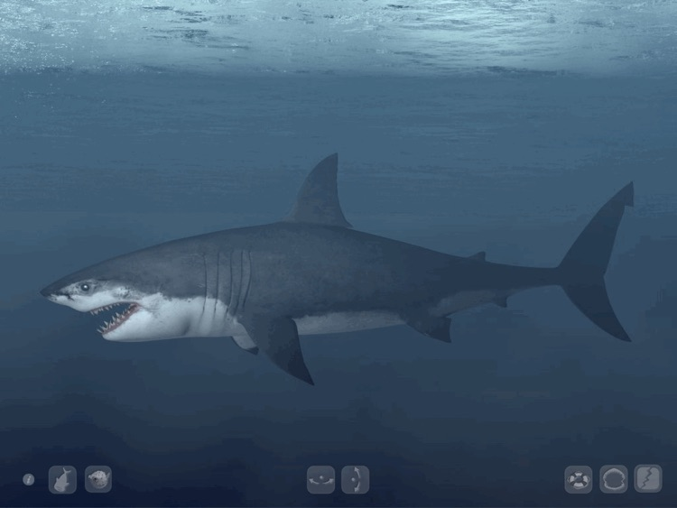 Talking Great White HD - for iPad screenshot-3