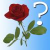 A Flower Quiz