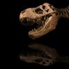 1400+ Dinosaur Handbook Complete