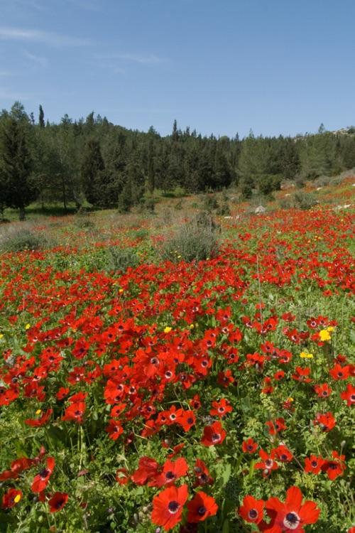 Beautiful Israel screenshot-4