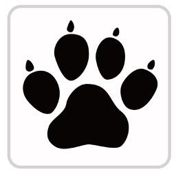 AnimalQuiz-Dog,Cat,Bird,Fish,Dinosaur,Insects-