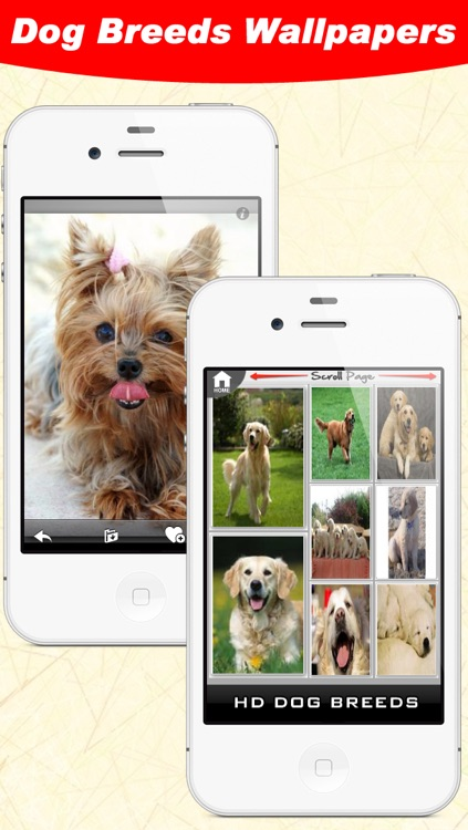 Dog Breeds WallPapers