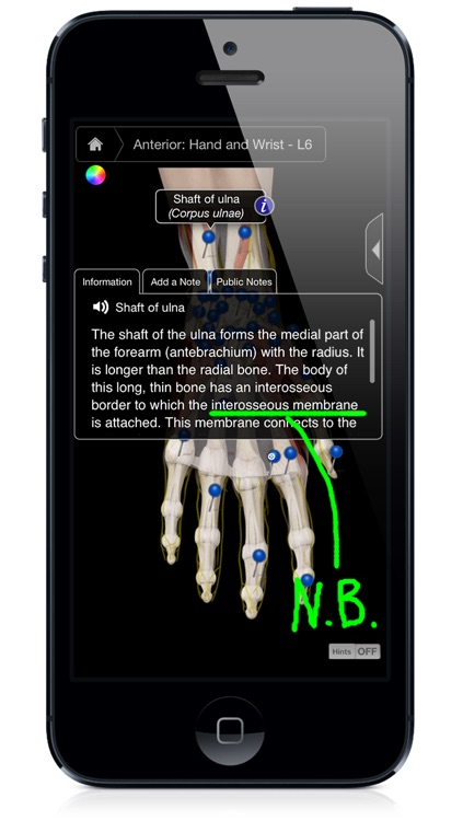 Hand & Wrist Pro III with Animations - iPhone Edition
