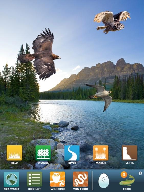 My Birds of Prey HD