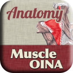 Anatomy - Muscle OINA