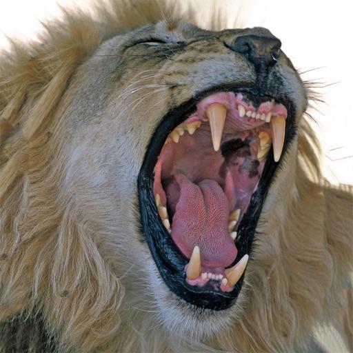 Dangerous Predators - Animals in the Wild