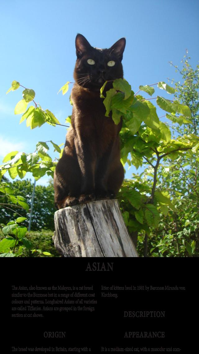 Cats Magazineのおすすめ画像2