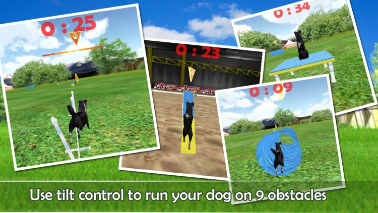Dog Agility 3D screenshot-2