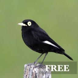 Birdwatcher's Quiz FREE