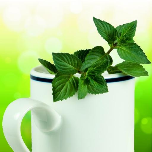 Herbal Remedy Bible