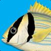 Peces Marinos - Guía de Identificación para iPad