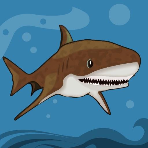 Sharks Info