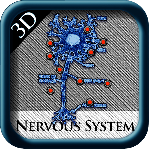 3D Nervous System