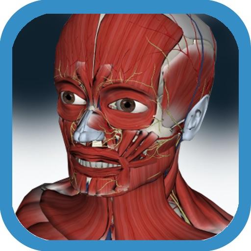 3D Anatomy Muscle and Bone