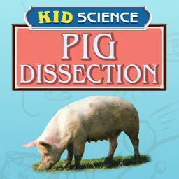 Pig Dissection