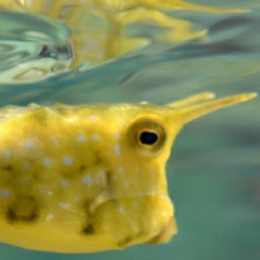 Real Fish Aquarium