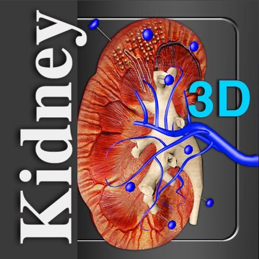 Kidney 3D
