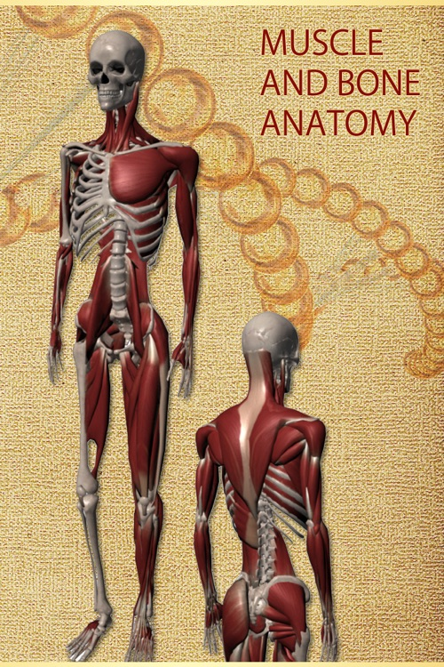 Anatomy Muscle and Bone: Visual Game & Dictionary