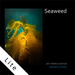 seaweed - Art meets science for Iphone lite