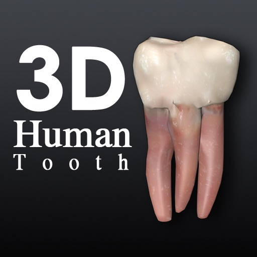 Human Tooth 3D icon