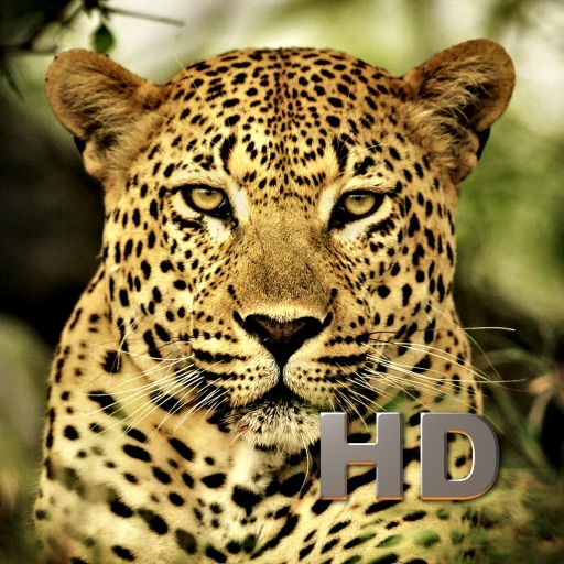 Animal Kingdom HD