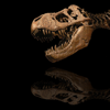 Dinosaur Encyclopedia - scott hotaling