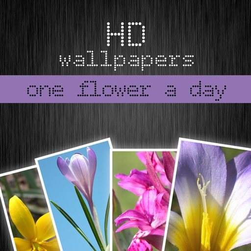 HD flower wallpapers - one flower a day (Retina display) iOS App