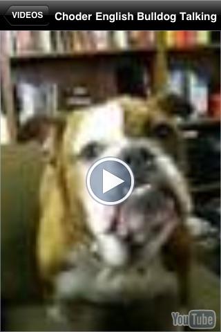 Bullies - English Bulldog Fun