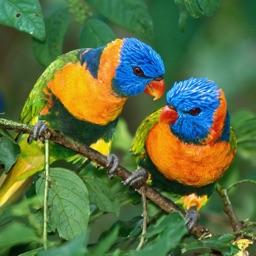 Atlas: BIRDS of Planet EARTH