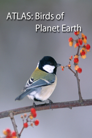 Birds on Planet Earth screenshot one