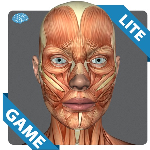Muscular Anatomy Game Lite