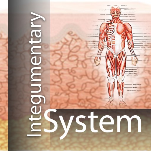 Integumentary System icon
