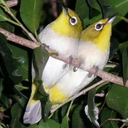 iLove Birds