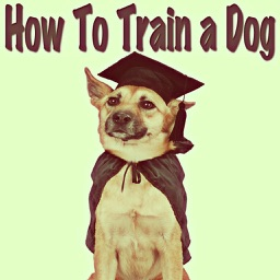 How to Train a Dog: Teach Your Dog Obedience Training!