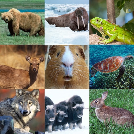 What's The Animal Name (100 Puzzles)
