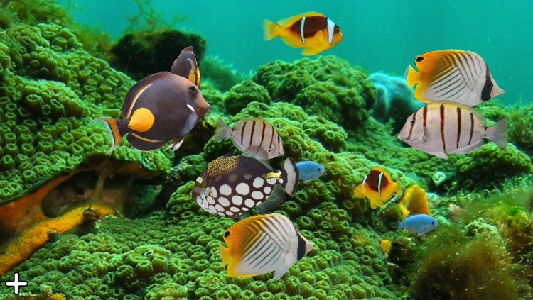 MyReef 3D Aquarium 2 Lite screenshot-3