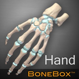 BoneBox™ - Hand Viewer