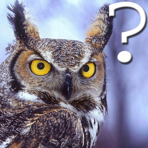 Amazing Bird Quiz