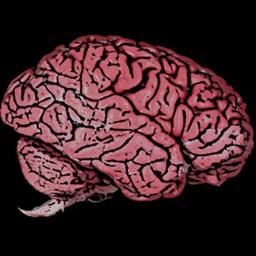 Grade 12 Biology: The Nervous System