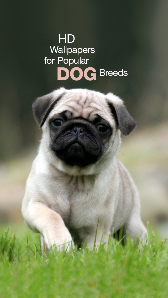 Popular Dog Breeds HD Wallpapers for  Your Lock Screen