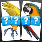 4 Pics 1 Word - Close Up Edition icon