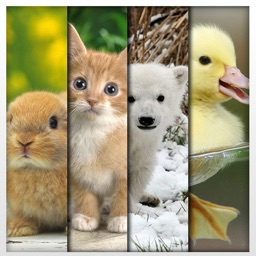 Funny & Cute Animals HD Wallpapers - Adorable Pets: Free Background Pictures