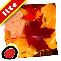 """Fall Changes - Learn about how nature changes during the autumn season in this book with words and photographs by Ellen Senisi (""""Lite"""" version by Auryn Apps)"""