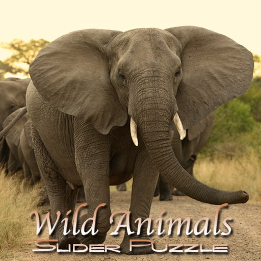 Wild Animals Slider Puzzle HD