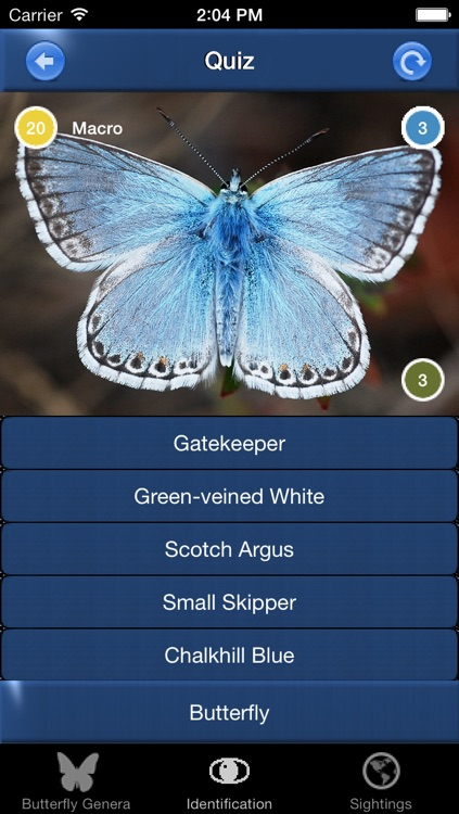 Butterfly Id - The British Identification Guide to Butterflies screenshot-3