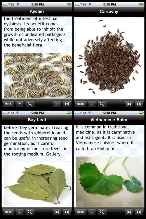 Culinary Herbs & Spices Encyclopedia