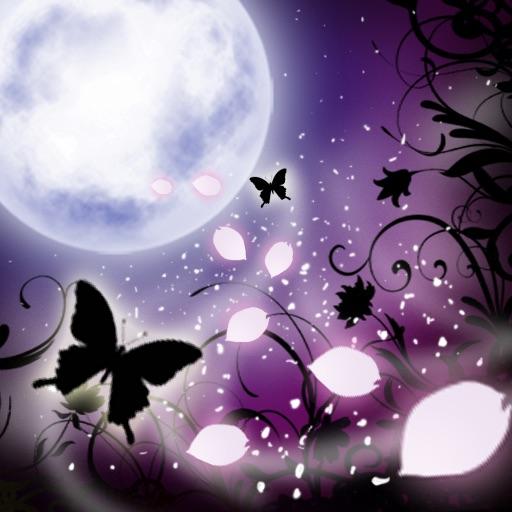 Dazzling Night