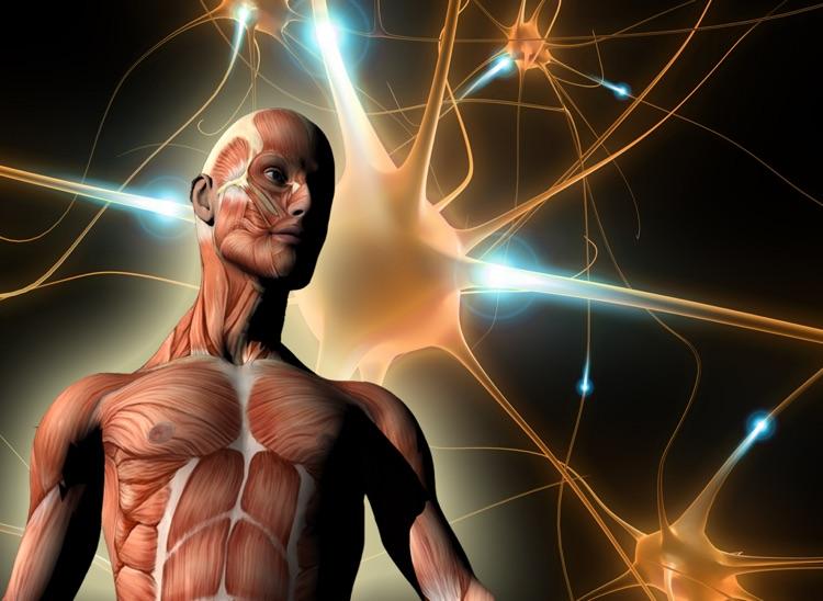 ATLAS: Human Body A-Z FREE for iPad